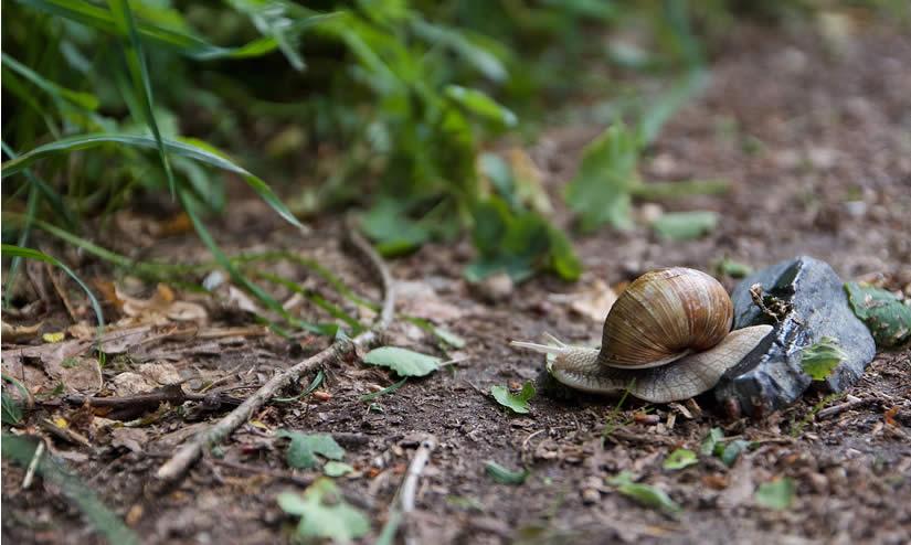 slow progress metaphor